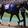 Photos: ヴィルシーナ(2回東京8日 11R 第9回 ヴィクトリアマイル(GI)出走馬)