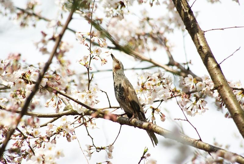 動物たちの春だから(2)