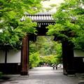 そうだ京都に、行こう!