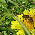 Photos: 花粉いっぱい♪ 幸せいっぱい♪