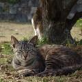 叶崎灯台の猫・3