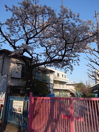 南千住第三幼稚園の桜(2009/4)