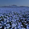 Photos: 青。