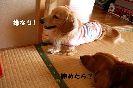 ぶちぎれラーメン 5