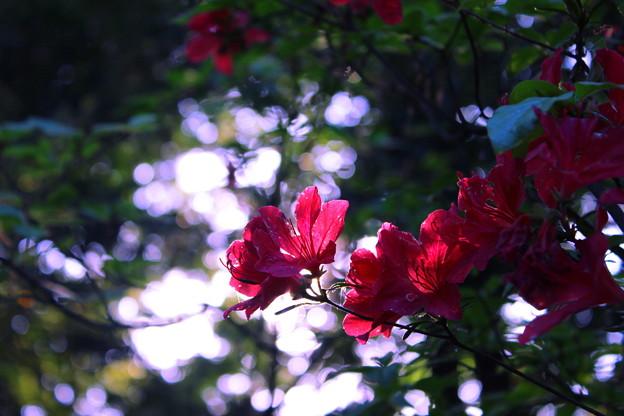 池のような光と花