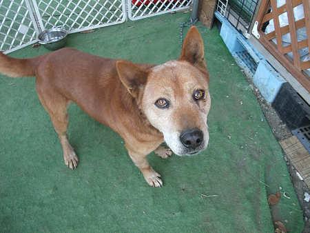 お散歩隊隊員に保護された迷い犬 仮称「SEGAWA」くん。夕方、無事に飼い主さんが現れました♪