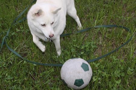 ましろちゃん、サッカーする…振り(T_T)
