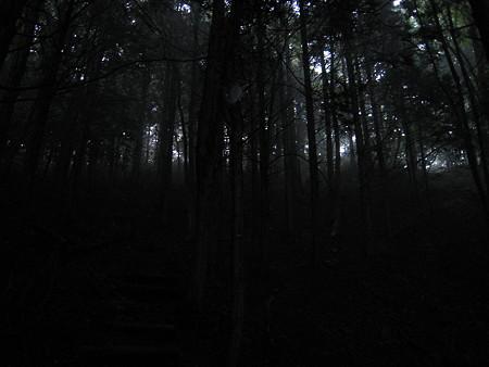 暗く霧に覆われた登山道