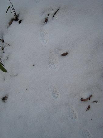 動物の足跡1
