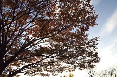 名瀬下第三公園 03