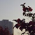 写真: 品濃中央公園のサザンカ 01