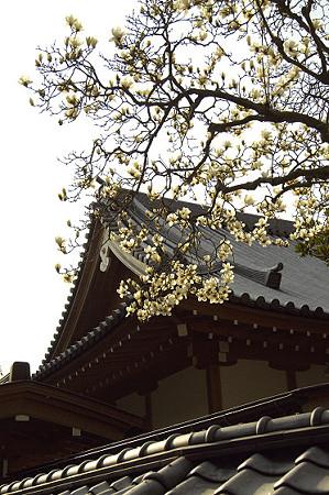 円覚寺 03