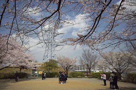 東戸塚の桜 11