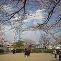 写真: 東戸塚の桜 11