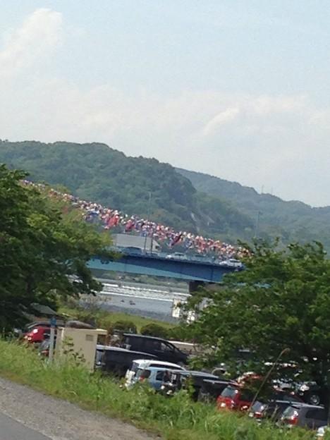 写真: 相模川鯉のぼり