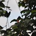 写真: ツーショットのアゲハ蝶