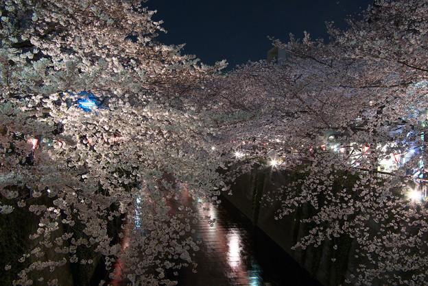 写真: 目黒川・夜桜2